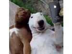 Кучешко селфи