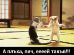 Две котки си говорят
