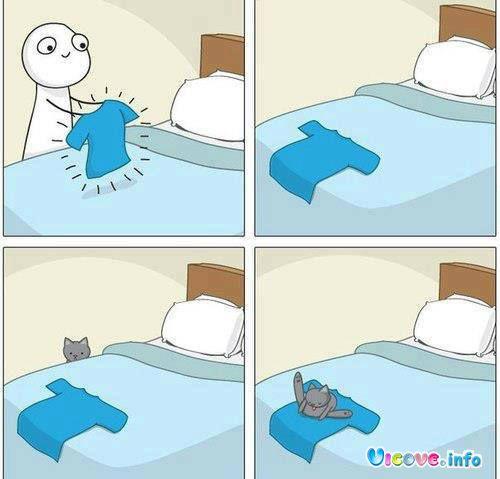 Котешки навици